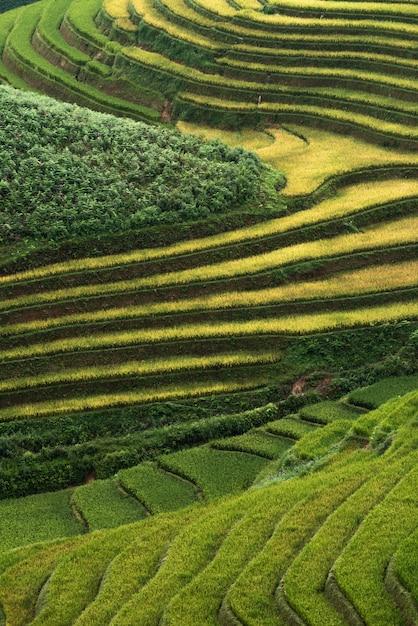 Rizières abstraites sur les terrasses de mu cang chai vietnam Photo Premium