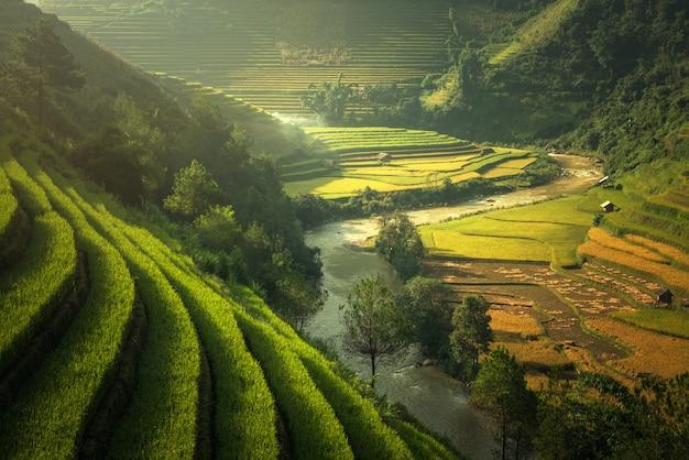 Rizières mu cang chai, vietnam Photo Premium