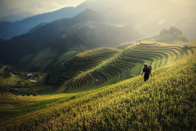 Les rizières préparent la récolte au nord-ouest du vietnam Photo Premium