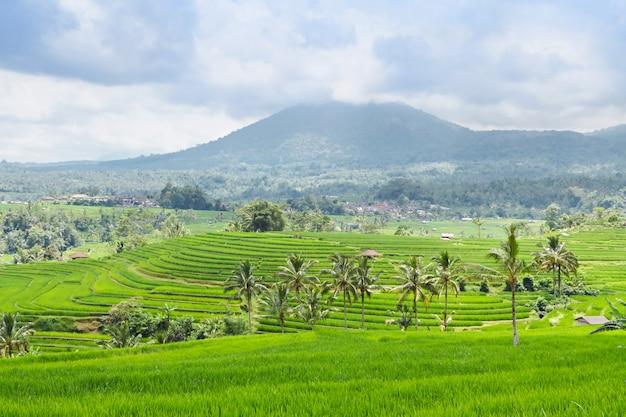 Rizières en terrasses et montagnes à bali Photo Premium