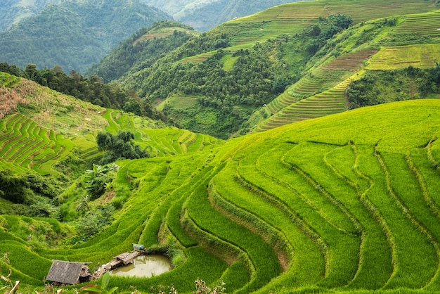 Rizières en terrasses de mu cang chai vietnam Photo Premium
