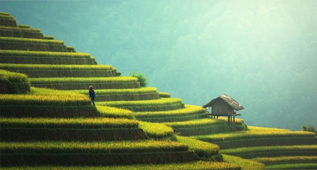 Rizières en terrasses de mu cang chai, yenbai, vietnam. Photo Premium