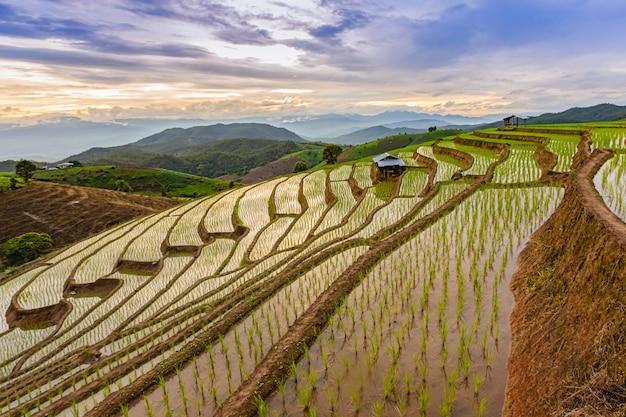 Rizières en terrasses de pa bong piang pendant la saison des pluies, chaingmai, thaïlande Photo Premium