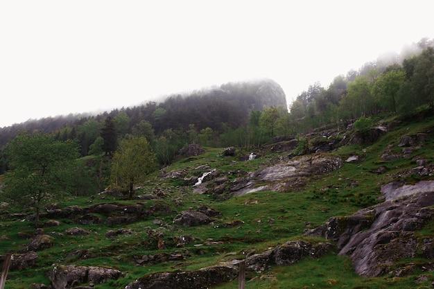 Roches Recouvertes De Verdure Et De Brouillard épais Photo gratuit
