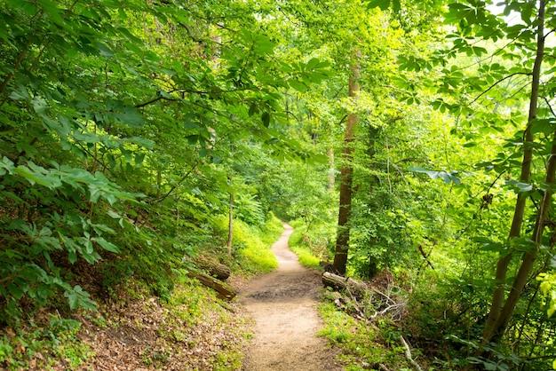 Rock Creek Park Photo gratuit