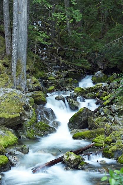 Rocky mountain creek Photo gratuit