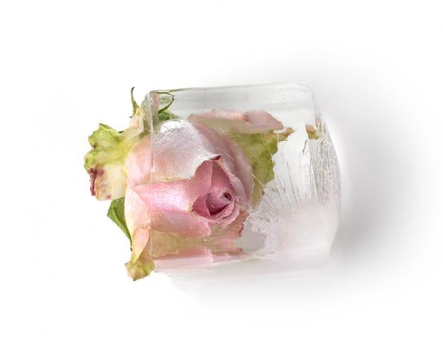 Rose Congelée Photo gratuit