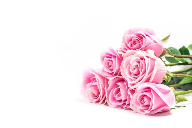 Rose rose sur fond blanc Photo Premium