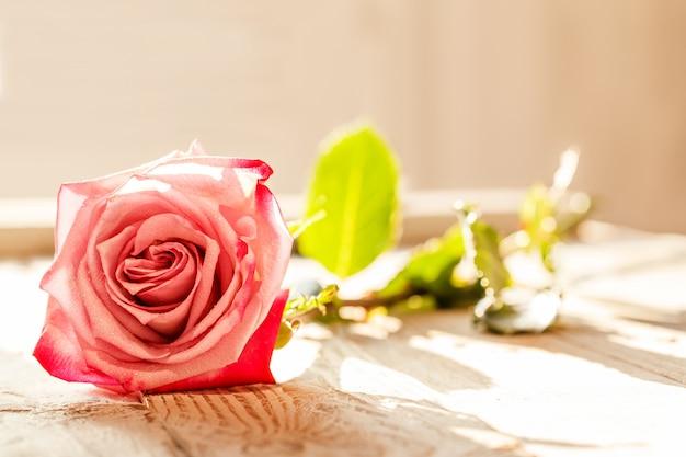 Une rose rose avec la lumière du soleil sur la table Photo Premium
