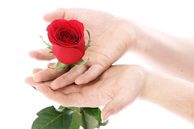Rose Rouge Dans Les Mains Photo gratuit