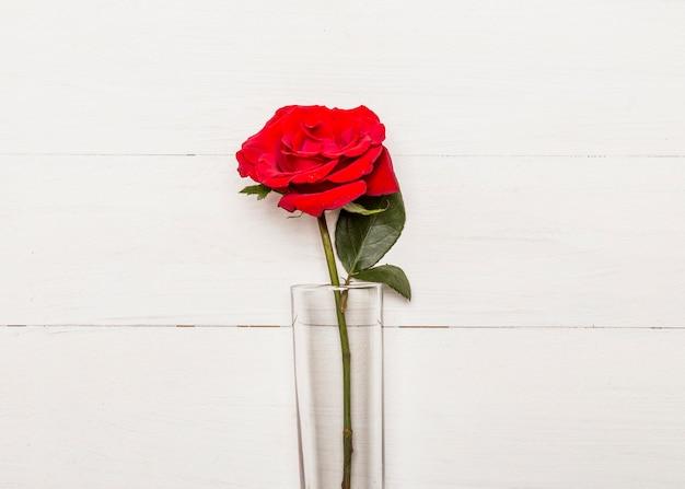 Rose rouge vif en verre sur une surface blanche Photo gratuit