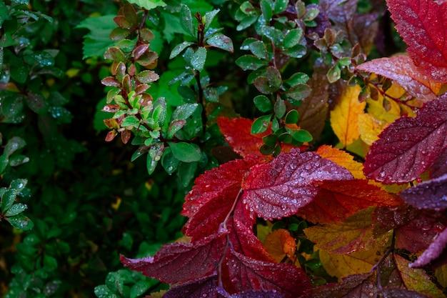 Rosée au début du printemps Photo Premium