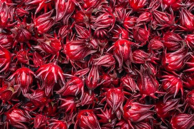 Roselle rouge fraîche utilisée pour le concept d'herbes ou d'aliments Photo Premium
