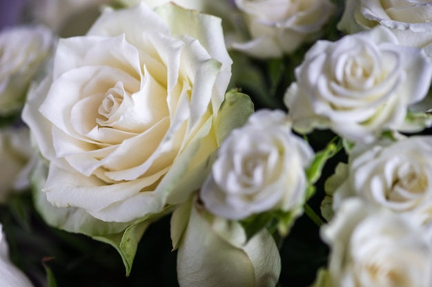 Roses blanches en bouquet Photo Premium