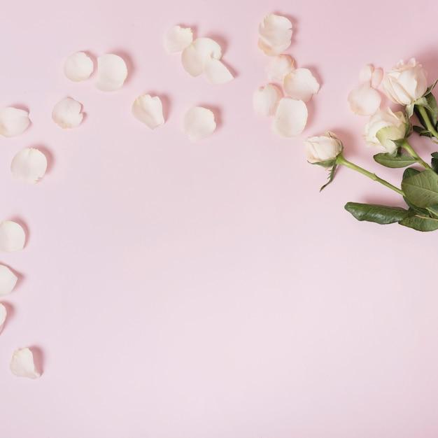 Roses blanches et pétales sur fond rose Photo gratuit