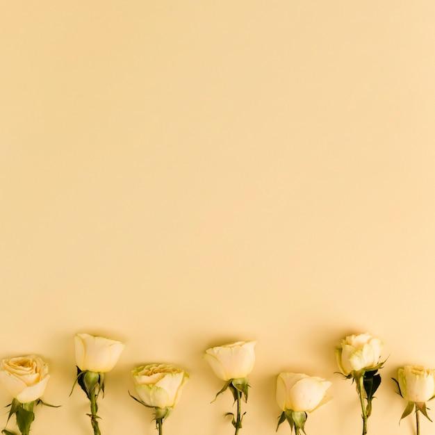 Roses fraîches jaunes avec espace copie Photo gratuit