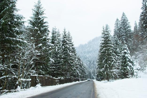 Route Asphaltée Entre La Forêt Enneigée. Route Dans La Forêt Alpine Photo Premium