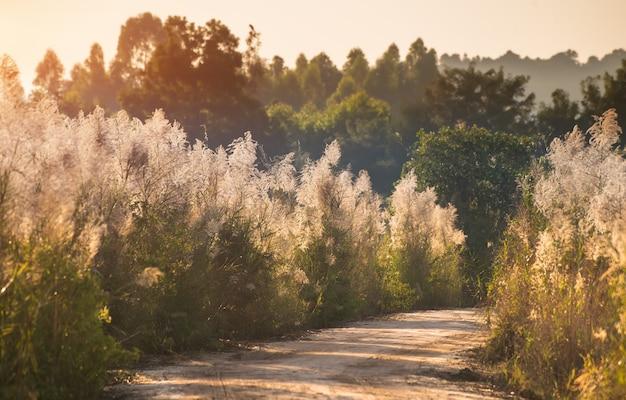 Route Avec Côté Arbres En Automne. Photo Premium