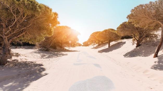 Route déserte entre les arbres sur une journée ensoleillée Photo gratuit