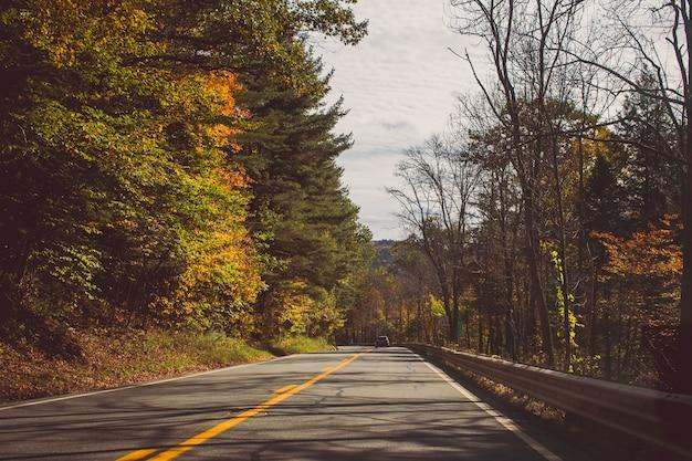 Route Droite Entre De Beaux Arbres Forestiers Le Jour De Suuny Photo gratuit