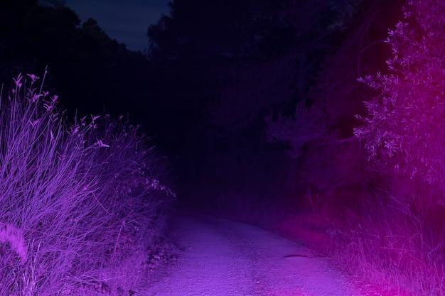 Route illuminée la nuit Photo gratuit