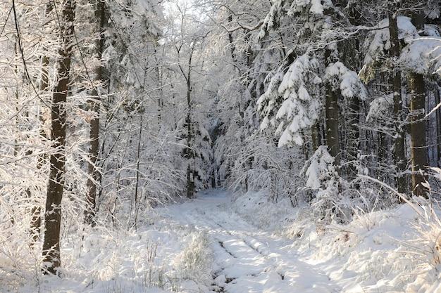 Route Rurale D'hiver Entre Les Arbres Couverts De Givre Photo Premium