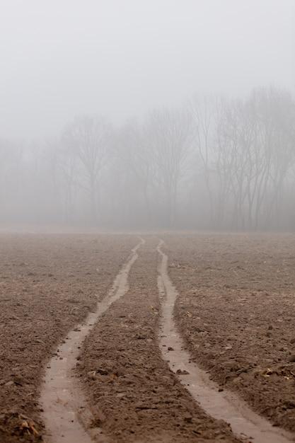 Route à Travers Le Champ Vers Les Arbres Dans Le Brouillard Photo Premium