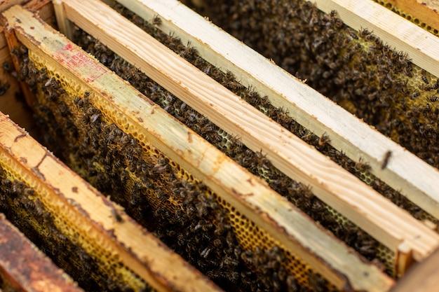 Ruche d'abeille Photo Premium