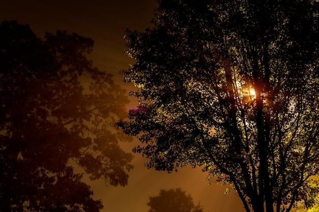 La rue près de l'arbre la nuit est recouverte de brouillard, éclairée par une lampe Photo Premium