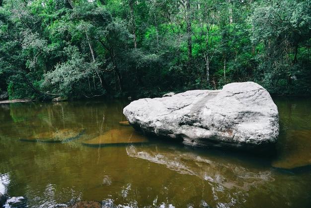 Ruisseau de montagne de cascade nature vert plante arbre forêt tropicale jungle Photo Premium