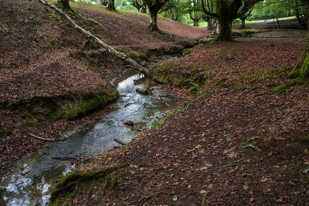 Ruisseau traversant un sol rouge foncé jusqu'à une forêt de hêtres Photo Premium