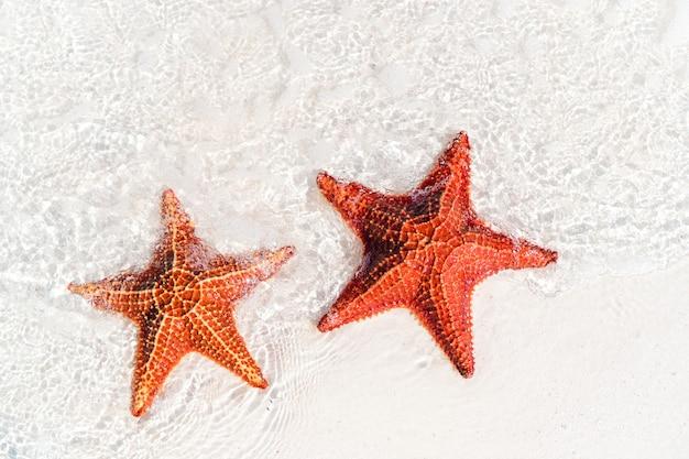 Sable blanc tropical avec étoile de mer rouge dans l'eau claire Photo Premium