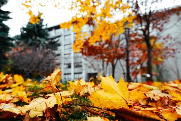 Saison d'automne de l'arbre et des feuilles Photo Premium