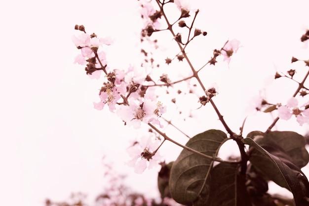 Sakura cherry blossom nature beauté Photo gratuit