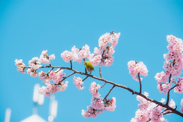 Sakura et oiseau, fleur de cerisier rose au japon au printemps. Photo Premium