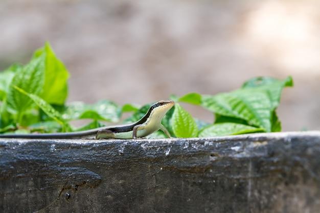 Salamandre se dresse fière Photo Premium
