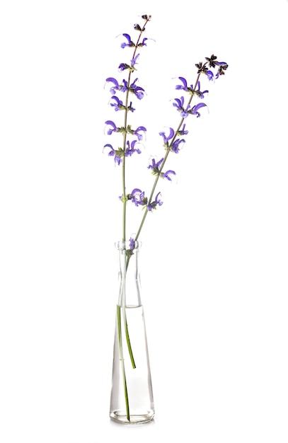 Salvia en éprouvette Photo Premium