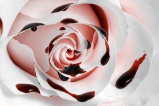Sang rose macro texture hdr Photo gratuit