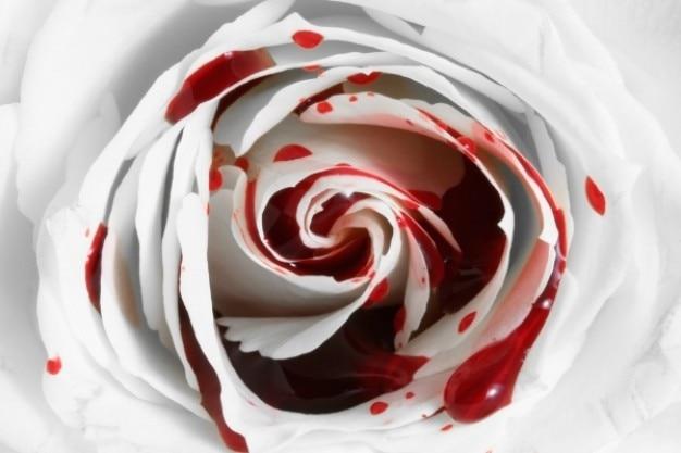 Sang rose macro Photo gratuit