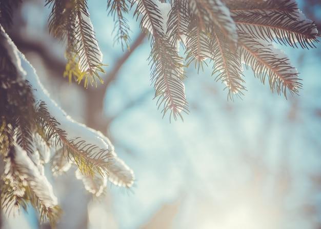 Sapin couvert de neige sous les rayons du soleil du matin. nature d'hiver Photo Premium