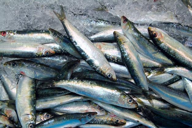Sardine poisson frais fruits de mer sur le marché de la mer de glace Photo Premium