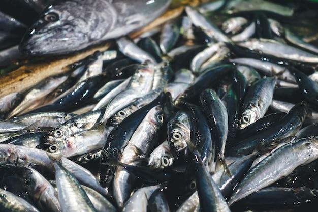 Sardines sur un marché aux poissons Photo gratuit