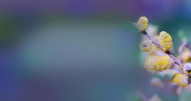 Saule printanier contre ciel bleu Photo Premium