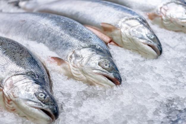 Saumon frais réfrigéré dans des carcasses entières se trouve sur la chapelure de glace Photo Premium