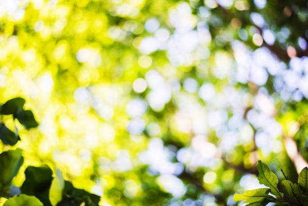Scène défocalisée de feuillage frais et de ciel bleu, idéal comme arrière-plan de nature avec des couleurs vives et éclatantes Photo Premium