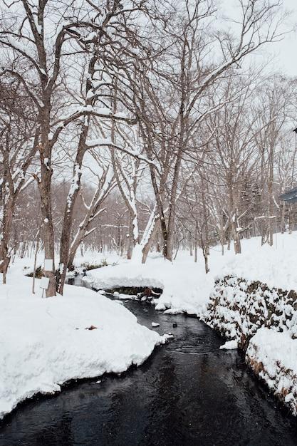 Scène de la forêt de neige au sanctuaire de togakushi, japon Photo gratuit