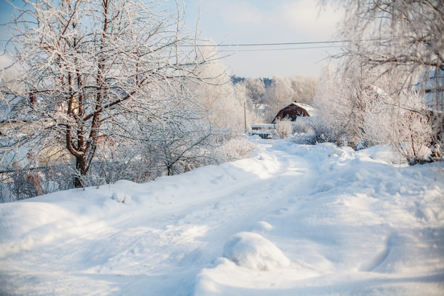 Scène Rurale D'hiver, Route Enneigée Et Arbres Recouverts De Neige Photo Premium