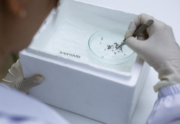 Scientifique avec équipement et moustique sur verre en laboratoire Photo Premium