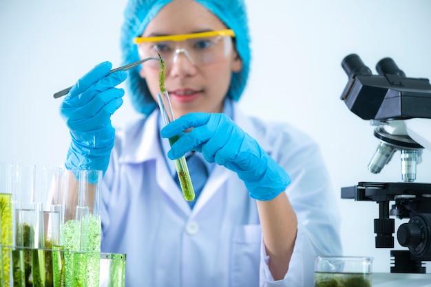 Les scientifiques développent des recherches sur les algues. Photo Premium