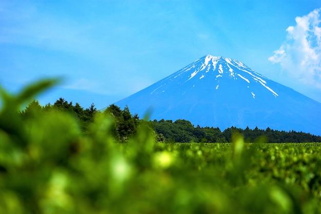 Se concentrer sur la belle montagne fuji Photo Premium